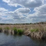 rice-marsh