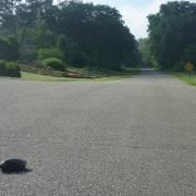 street-turtle