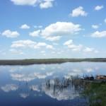 Minnesota Marsh